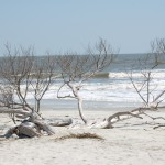 9675857760 imgve6N 150x150 Quick View of Hunting Island