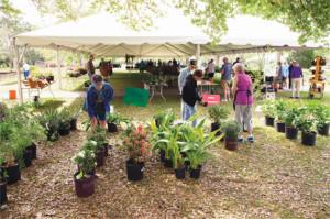 2016 spring plant sale